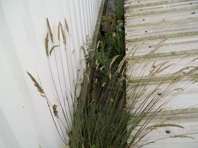 Plant growth in gutter