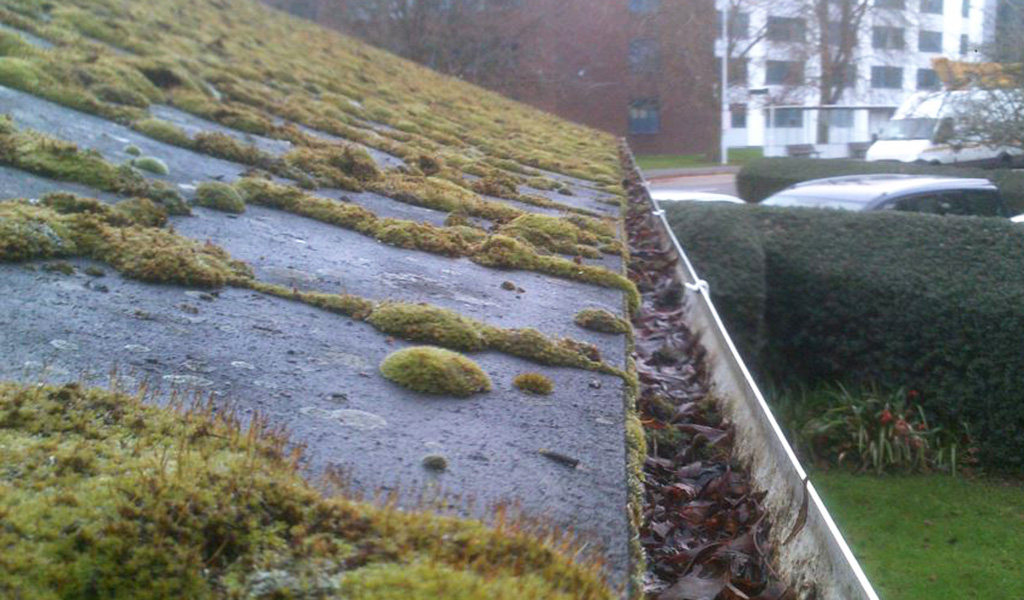 Moss & debris on roof and gutter