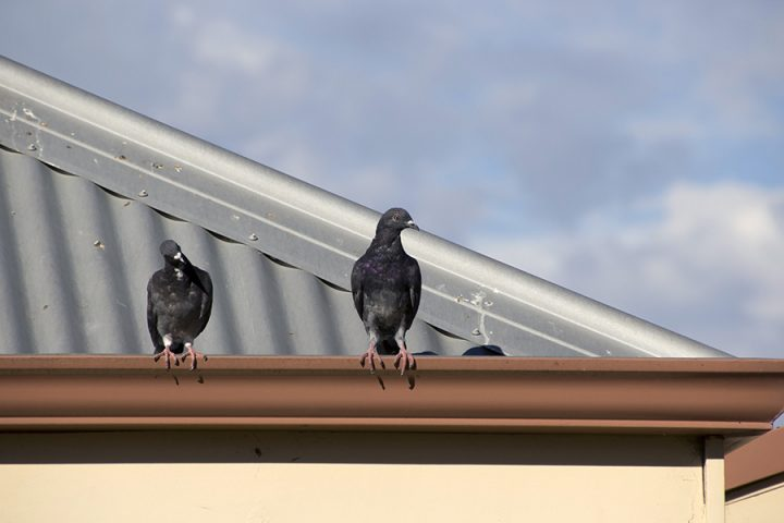 Two grey pigeons sat on the roof of an industrial building in summer