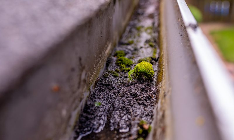 A close-up photo of a system in need of gutter cleaning, clogged with debris and moss growing within the guttering.